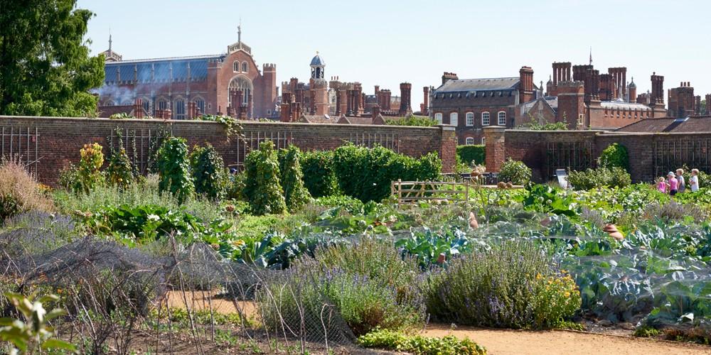 Королевский огород дворца Хэмптон-Корт, Лондон