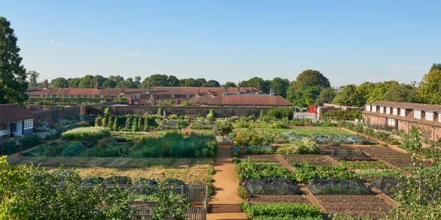 King's New Kitchen Garden, Hampton Court